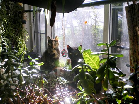 cat garden living green with pets bringing plants indoors the