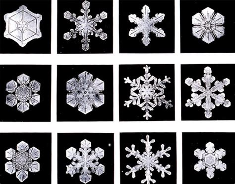 snowflake wilson bentley quot snowflake quot bentley snow photographer royal