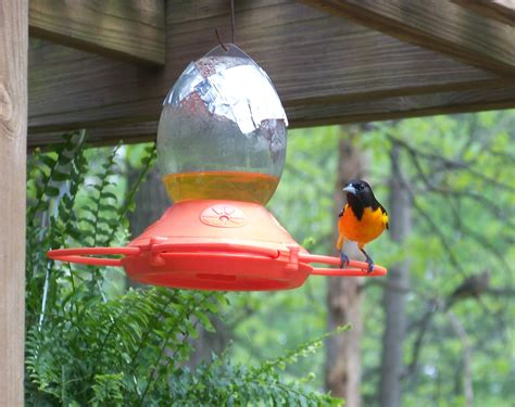 oriole feeder bird feeders