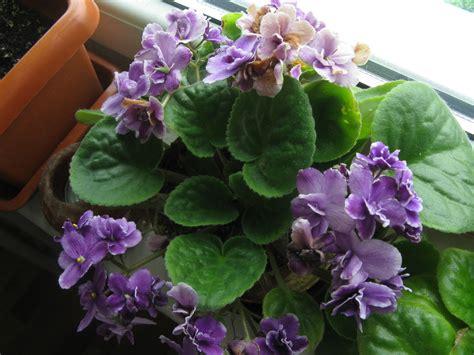 enfermedades de las plantas de interior diagn 243 stico de problemas con nuestras plantas de interior