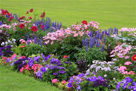 List Of Garden Flowers Names Of Flowers A List Of Flowers Which Are Easy To Grow