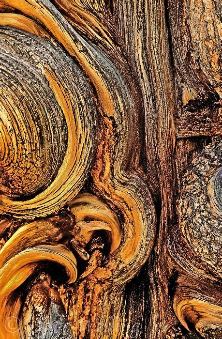 what does pattern in photography mean the bark of an ancient bristlecone pine pinus longeave in