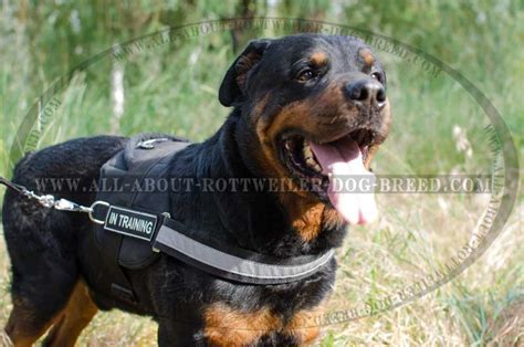 how should i walk my rottweiler order rottweiler harness id patches reflective