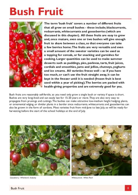 gardening guides bush fruit gardening guides for teachers