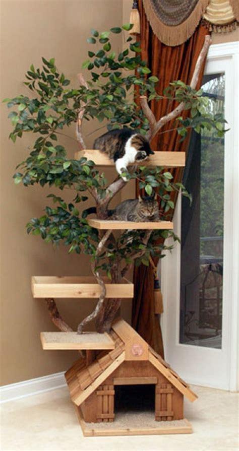 amazing outdoor cat climbing trees httplanewstalkcom