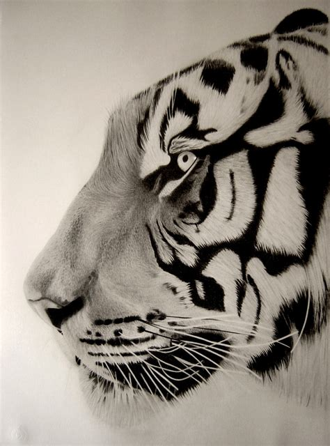 Drawings Of Animals by Eric Stavros Artwork Tiger Up Original Drawing