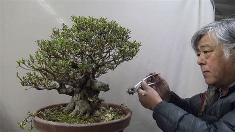 libro bonsai masterclass all you need bonsai master cut 70 years tree boldly part 1 youtube