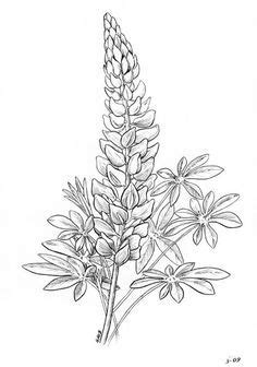 pin  leah atkeisson  painting flower coloring pages