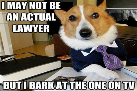 Lawyer Dog Memes - lawyer dog meme has a nose for justice