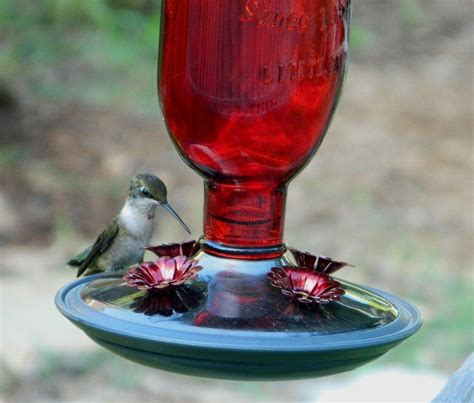 make your own hummingbird nectar hummingbird feeders and