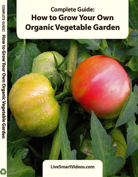 Top 28 How To Grow An Organic How To Grow Healthy Growing Your Own Vegetable Garden