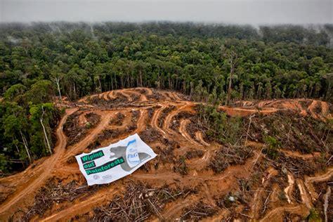 Water For Elephants Air Untuk Gajah By Gruen peneliti ugm pembukaan hutan untuk lahan sawit harus