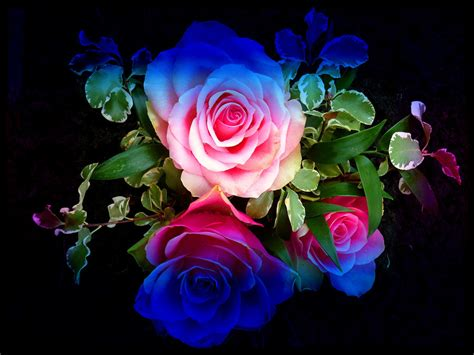 colorful roses colourful roses wallpaper high definition high quality