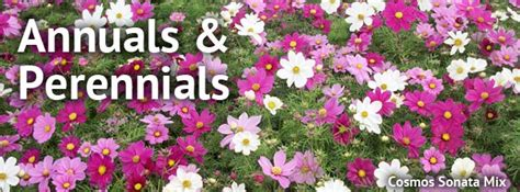 difference between an annual and perennial what s the