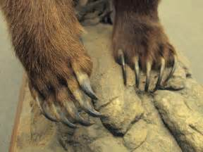 grizzly claws quotes
