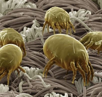 sind milben milben im bett bekaempfen