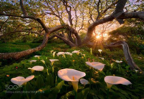 interesting photo   day  real life garden  eden