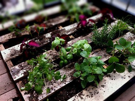 Pallet Vegetable Garden Nate P K Pallet Vegetable Garden
