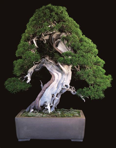 here s a thought bonsai the of bonsai and masters grade stainless tools bonsai bark