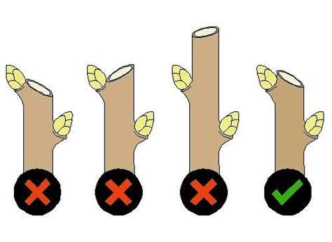 Potatura Cachi Periodo by Potatura Piante Tecniche Di Giardinaggio