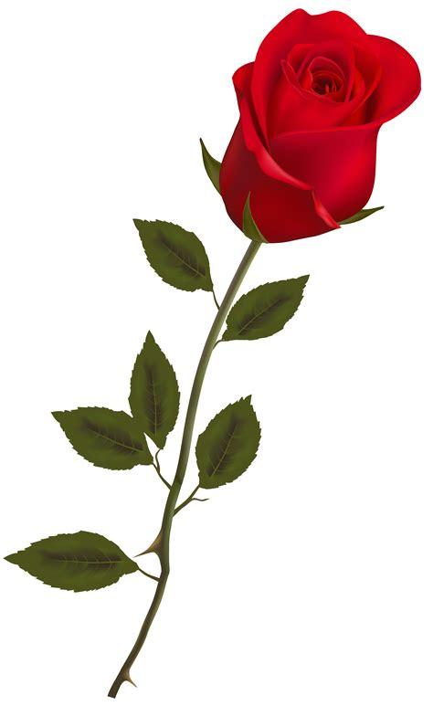 rosa clipart beautiful clip cliparts