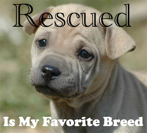 rescue a puppy rescue quotes and poems