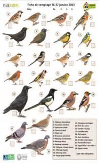 comptage national des oiseaux des jardins pour mieux