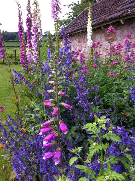 Country Garden Flowers Country Garden Foxgloves And Salvia By The Barn How Should My Garden Grow
