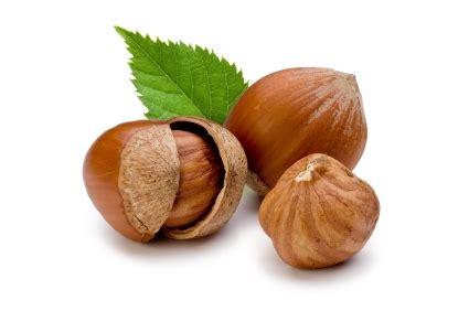 bagaimanakah rupa pokok kacang walnut badam hazelnut