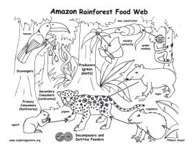 coloring book album link food chain coloring page az coloring pages