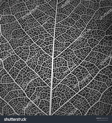 texture pattern black white leaf vector texture pattern background black stock vector