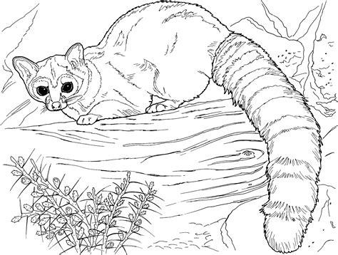 Lemur Coloring Page free lemur coloring pages
