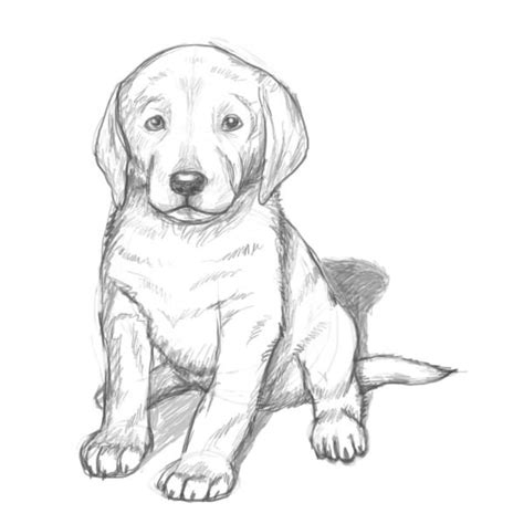 coloring pages of lab puppies yellow lab puppy coloring pages yellow lab puppy coloring