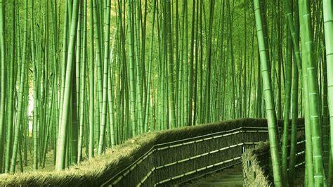 bamboo forest best desktop backgrounds wallpaper view