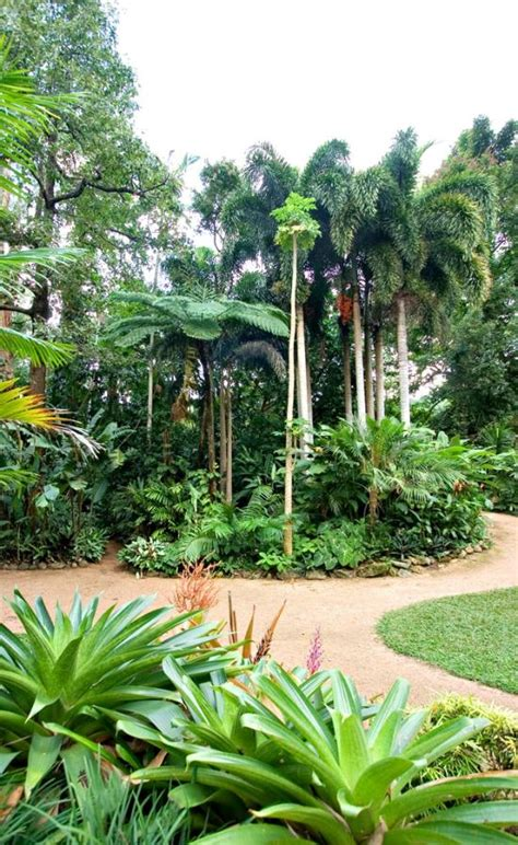 Cairns Botanic Gardens Popular Attractions In Cairns Tripadvisor