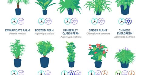 nasa best plants nasa reveals a list of the best air cleaning plants for