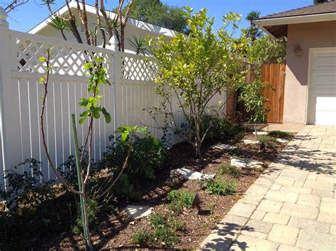 backyard fruit trees amazing backyard fruit trees for wondrous plum best