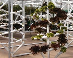home hydroponics 12 and play home hydroponics systems treehugger