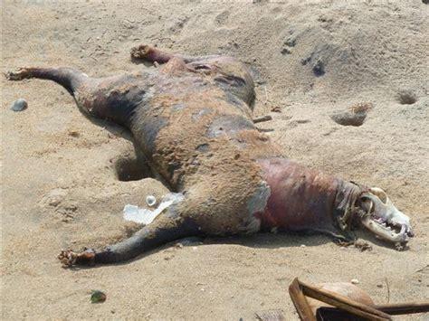 dead dogs dead photo