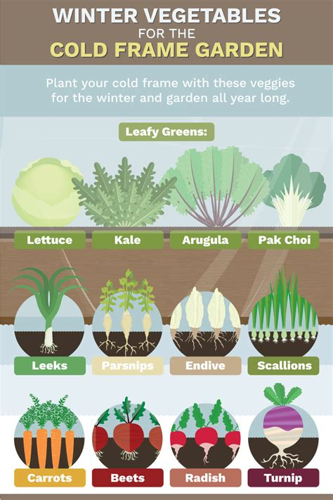 vegetables that grow in winter extend growing season fix