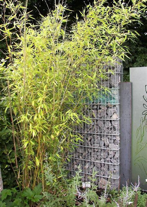 Sichtschutz Garten Pflanzen 106 by Sichtschutzmauer Aus Gabionen Sichtschutz Und