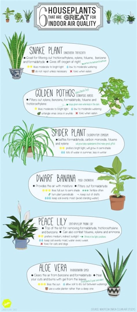 improve your home s air quality with these 6 houseplants