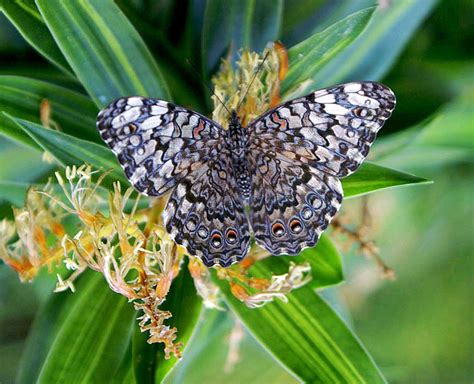 imagenes de mariposas multicolores 191 c 243 mo es la cabeza de las mariposas estructura y partes