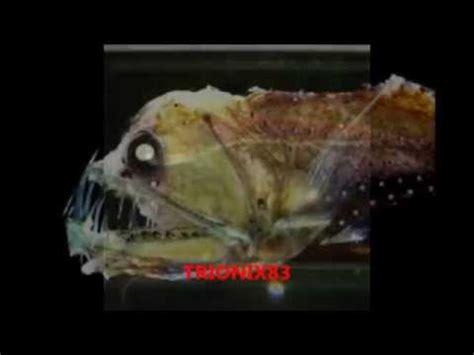 imagenes raras que dan miedo animales monstruosos reales seres extra 241 os y animales