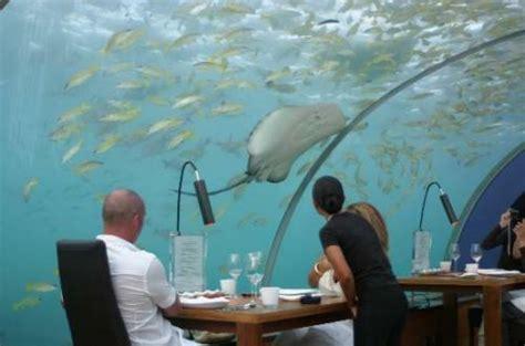 shangralafamilyfun shangrala s undersea restaurant shangralafamilyfun shangrala s undersea restaurant