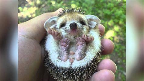 imagenes de animales lindos animales mas lindos de bebes youtube