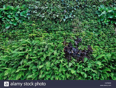 Living Green Wall Vertical Garden Gardening Small