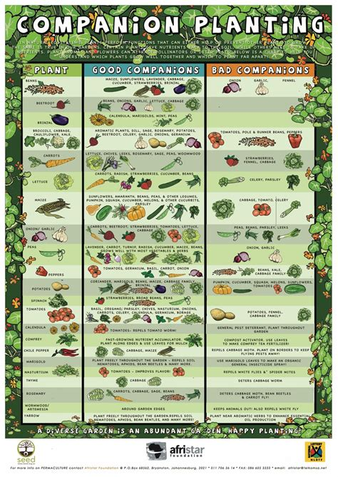 herb planting chart educational resources afristar foundation afristar