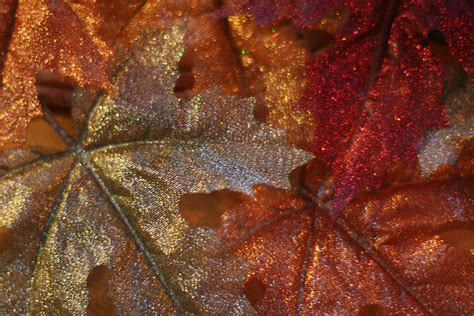 glitter leaves pictures   images  facebook