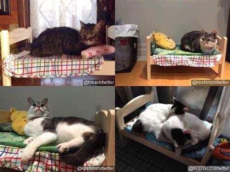 Kasur Hewan Anjing Kucing imutnya kasur kasur mungil untuk kucing kabar berita artikel gossip wowkeren
